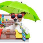 Dicas de viagem para pets